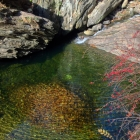 Cresheim Creek's collection of fallen leaves, stored underwater at Devil's Pool