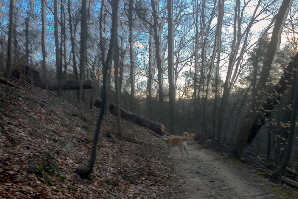 Incident On Wissahickon White Trail, Or, An Open Letter To Dog People