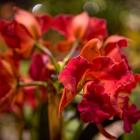 flowershow_14