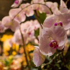 flowershow_15