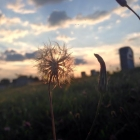 Kimberly Iburg | Mount Moriah Cemetery