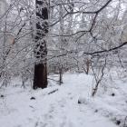Cresheim Trail