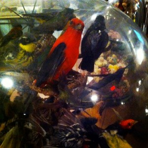 Birds at Historical Society of Frankford | Photo: @elliebeee