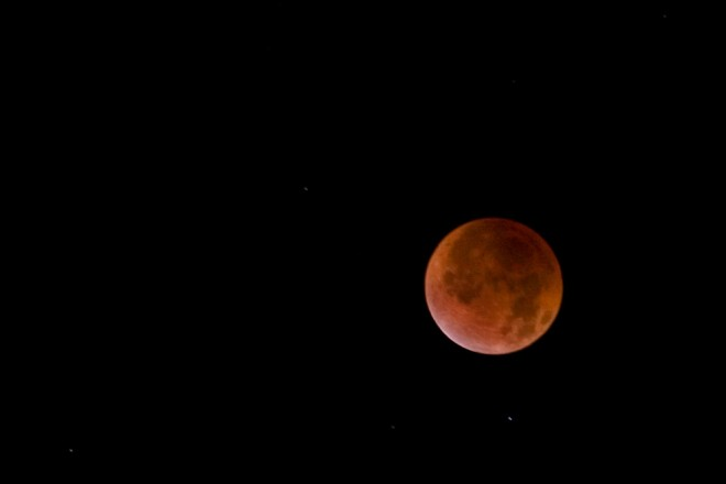 Lunar eclipse, December 2011 | Photo: Bradley Maule