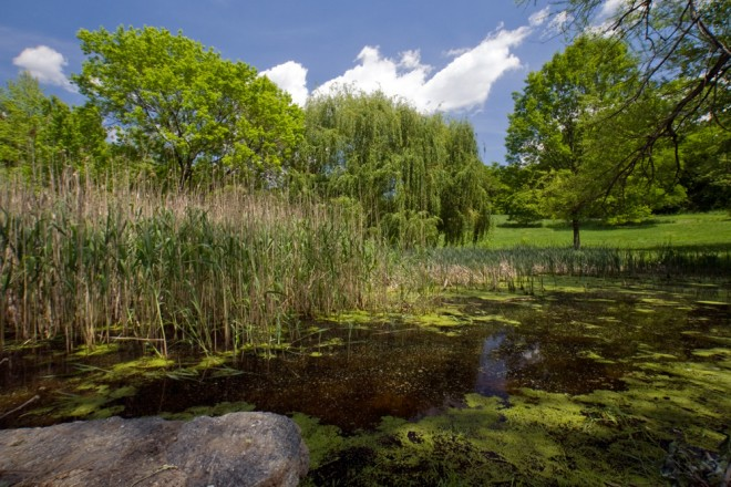 A pond at the low end of a meadow indicates the historic water course of the Wingohocking Creek, which feeds Tacony-Frankford Creek and ultimately the Delaware   Photo: Bradley Maule