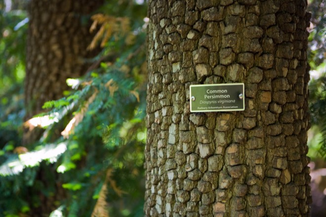 Natural geometry of persimmon bark   Photo: Bradley Maule