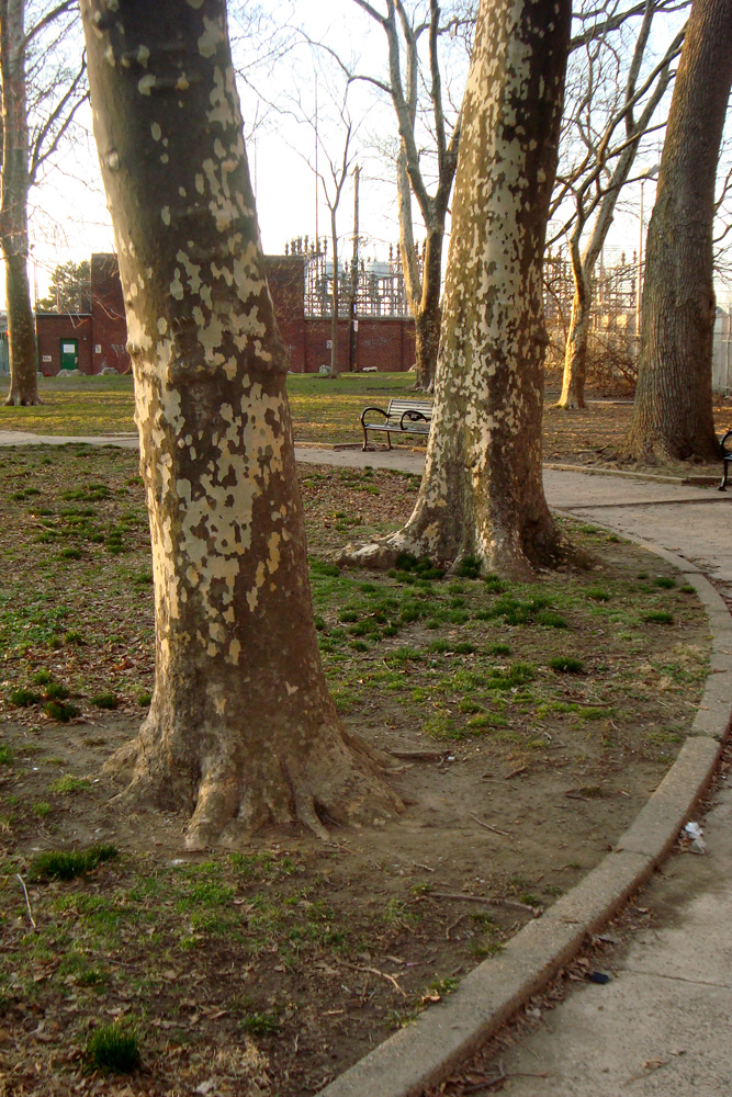 A Matter of Modern Recreation Vs Historic Trees At Penn Treaty Park
