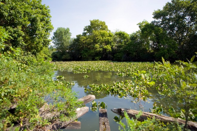 An eddy at the former Coke Company site has been reclaimed by nature, a tidal marsh   Photo: Bradley Maule