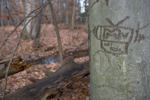 """I want my MTV."" A tree carving evidently from the 1980s along the tiny Wissahickon Creek in Montgomery Township 