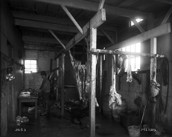 """Interior of Slaughterhouse (Abattoir), 5319 Westminster Avenue, Dr. Schreiber, Meat Inspector. January 16, 1909"""
