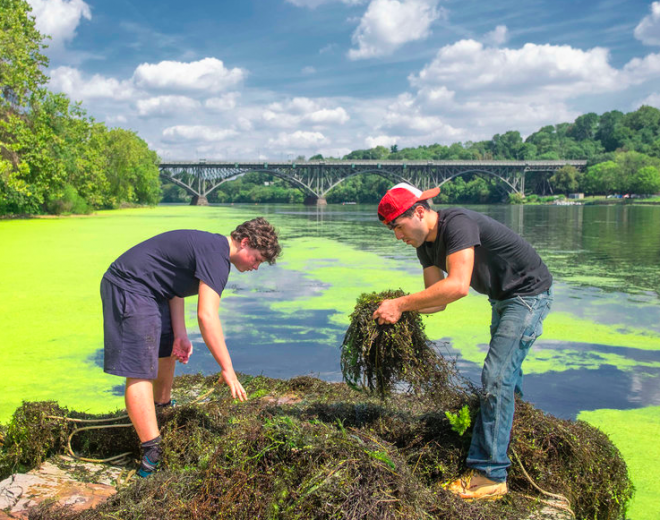 Adam Lutz and Efrain Santiago assist in Al Wachin's struggle against Eurasian milfoil. | Photo: Ed Hille, for philly.com