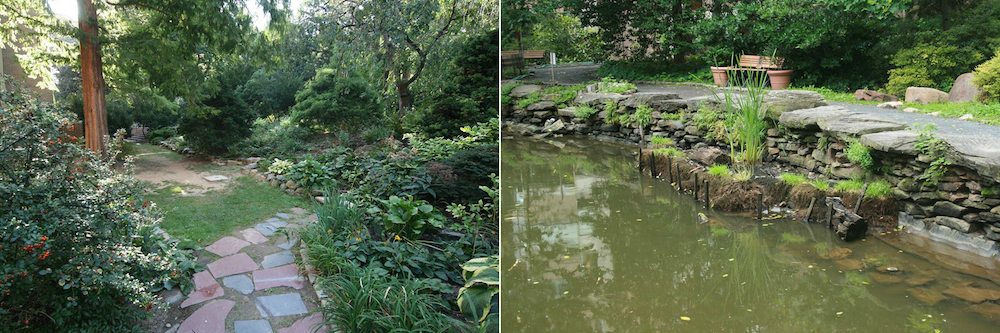 The Rise & Ruckus Over Bio Pond, Penn's Hidden Urban Oasis