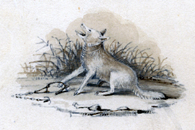"""Prairie wolf in distress,"" showing an ensnared coyote howling at the sky, by Titian Ramsay Peale (1819). In the collection of the American Philosophical Society"